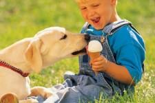 Домашние животные — как дети