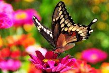 урок бабочки, притча про бабочку